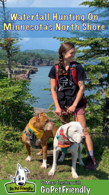 A woman, a brown dog, and a white dog standing in front of pine trees along the Lake Superior shoreline in Minnesota